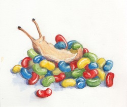 Jelly Belly - Watercolor