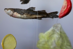 DETAIL - Fish Dinner Mobile