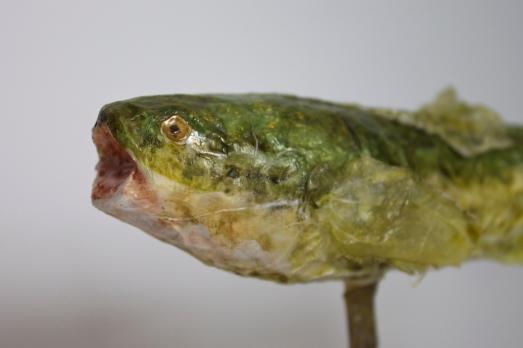 Leafy Fish - Detail