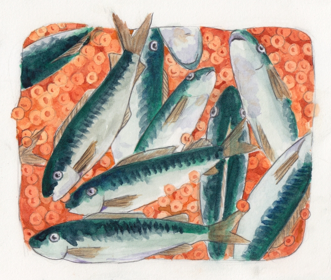 Sardines in Roe, Watercolor on Paper, 2015