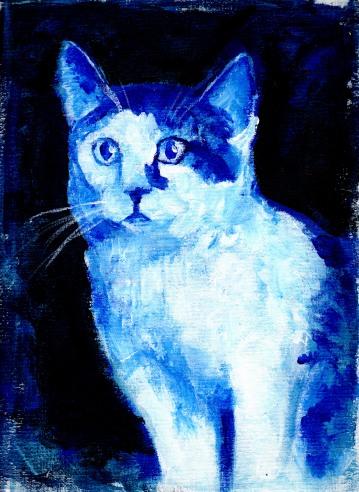 bloo cat