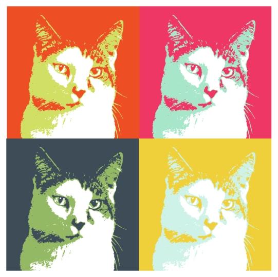 Kitten Full