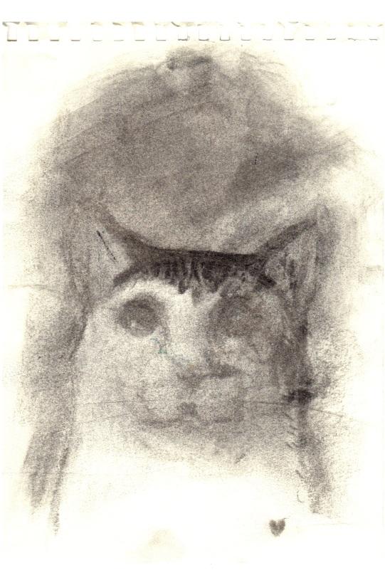 kitten shadow
